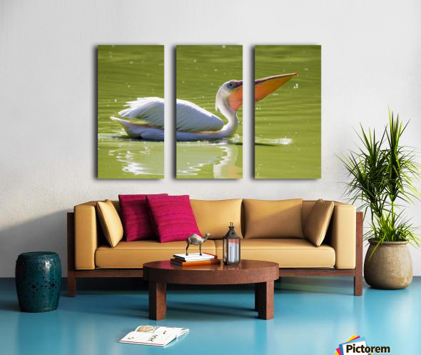Pelican Split Canvas print