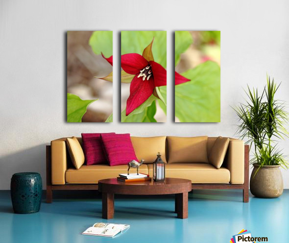 Red Trillium Split Canvas print