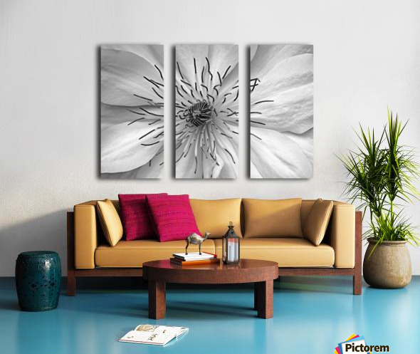 Clematis White Split Canvas print