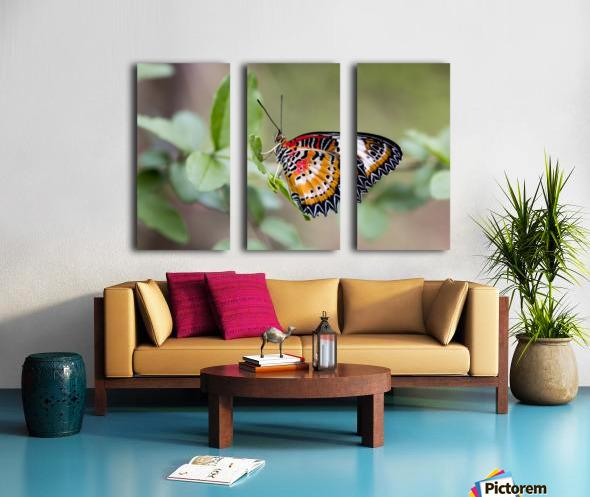 Leopard lacewing  Split Canvas print