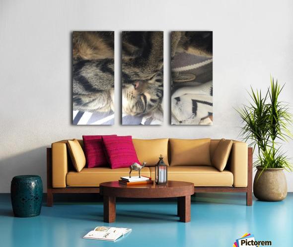 Gizmo - sleepy Split Canvas print