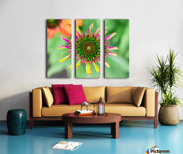 Echinacea Split Canvas print