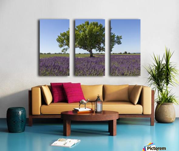 Tree in a lavender field Split Canvas print
