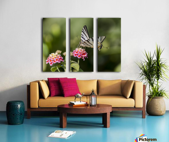 Scarce swallowtail butterfly Split Canvas print