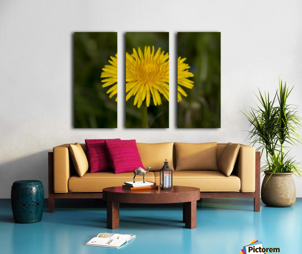 Dandelion macro Split Canvas print