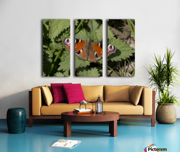 European peacock butterfly Split Canvas print