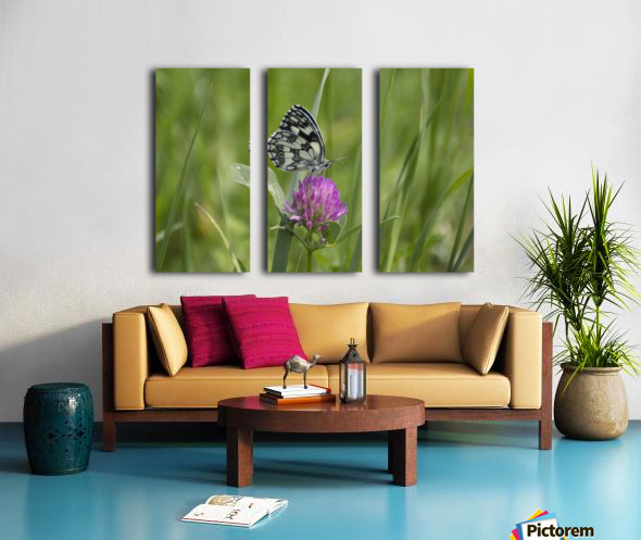 Marbled white Split Canvas print