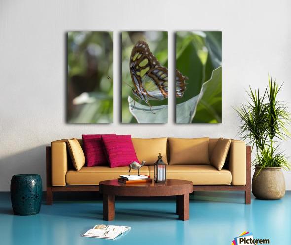 Malachite butterfly Split Canvas print