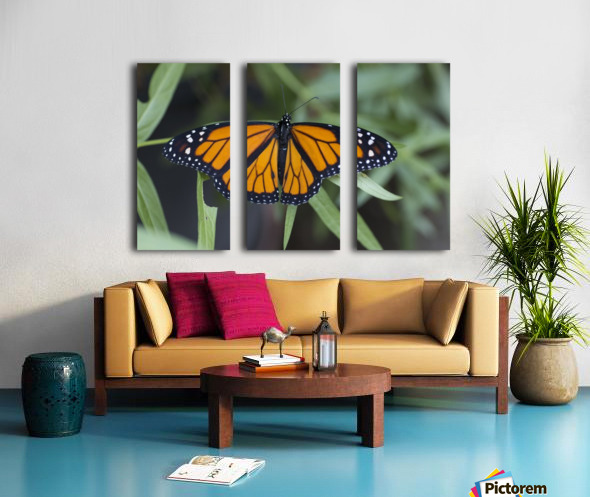Monarch butterfly Split Canvas print