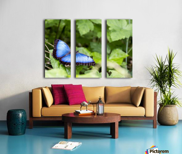 Morpho peleides butterfly Split Canvas print
