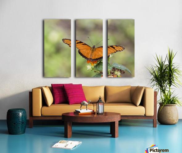 Julia heliconian butterfly Split Canvas print