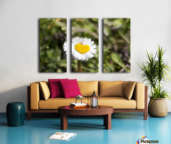 Heart shaped daisy Split Canvas print