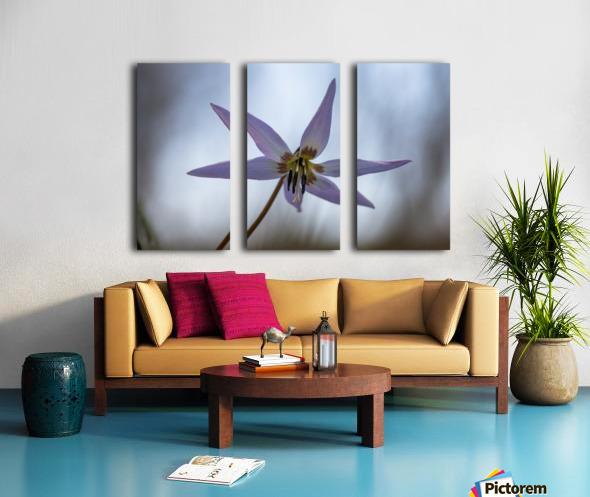 Dogtooth violet Split Canvas print