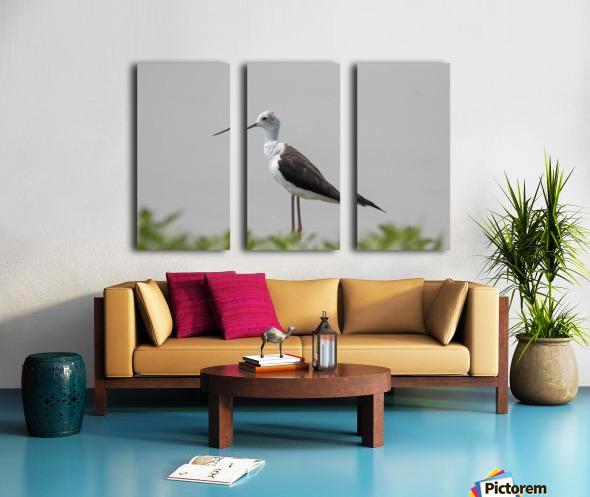 Black winged stilt Split Canvas print