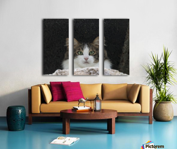 Cat portrait Split Canvas print