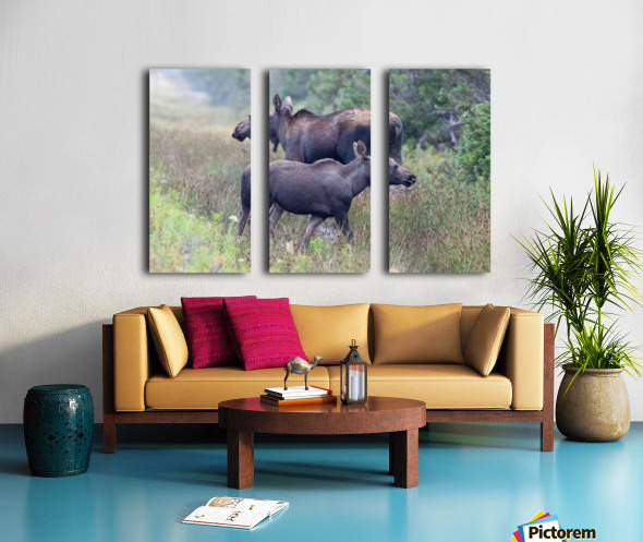 Mom and Calf Moose Split Canvas print