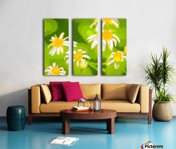 My Daisies - Mes Marguerites Split Canvas print
