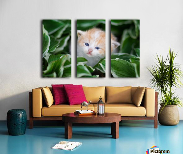 Orange Kitten Split Canvas print