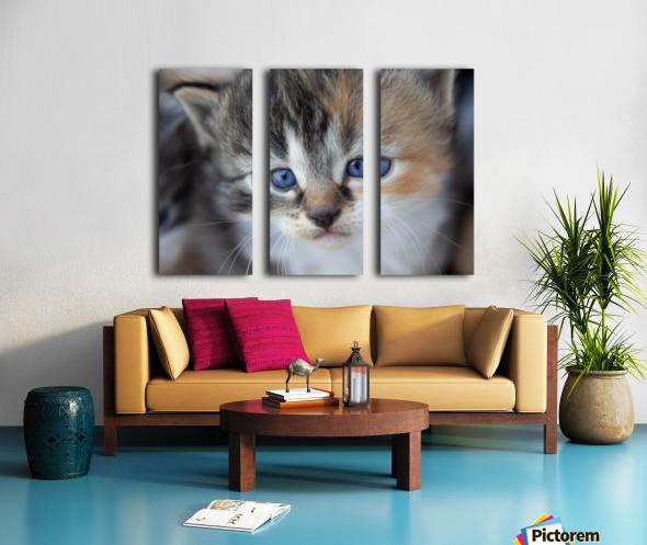 Kitten Face Split Canvas print