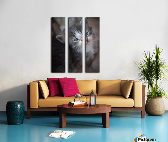 Gray Kitten Split Canvas print