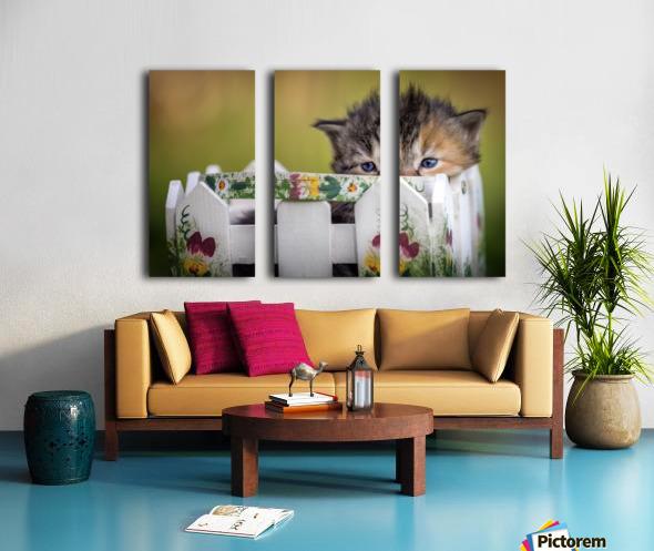 Kitten in basket Split Canvas print