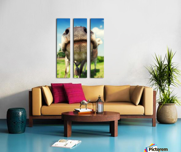 funny nose of a curious cow Split Canvas print