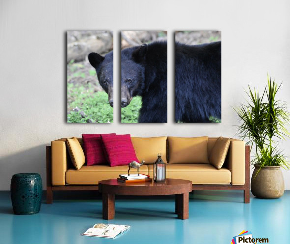 2350- black bear Split Canvas print