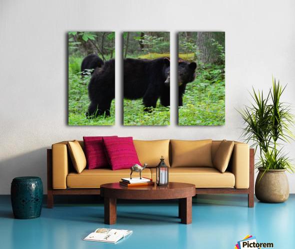 3299-Black Bear Split Canvas print