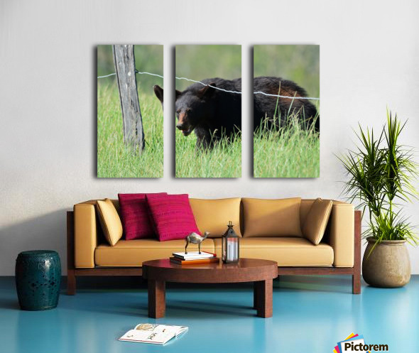 2966-Black Bear Split Canvas print