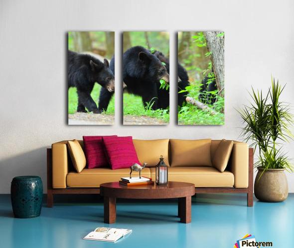 3540-Bear walk Split Canvas print