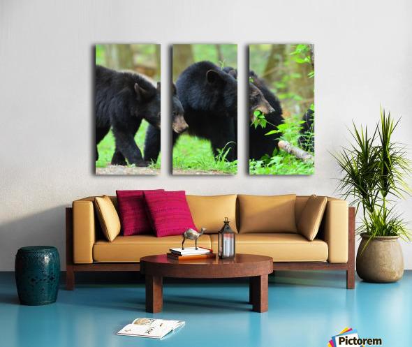 3541- Black bear Split Canvas print