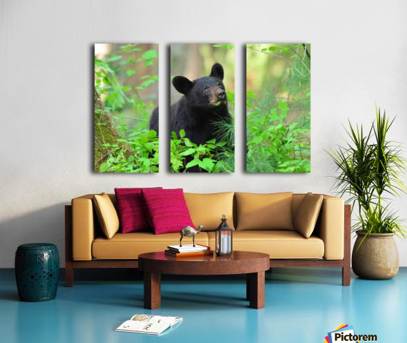 3597-Black Bear Split Canvas print