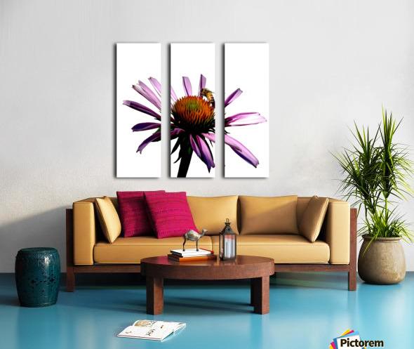 Daisy Bee Split Canvas print