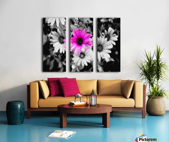 One Colored Daisy Split Canvas print