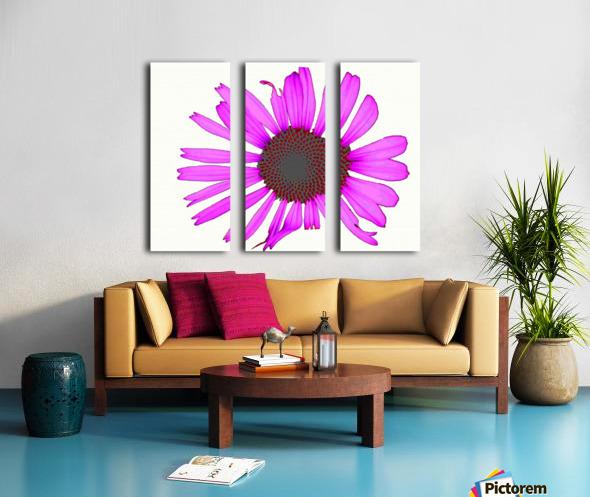 Daisy 3 Split Canvas print