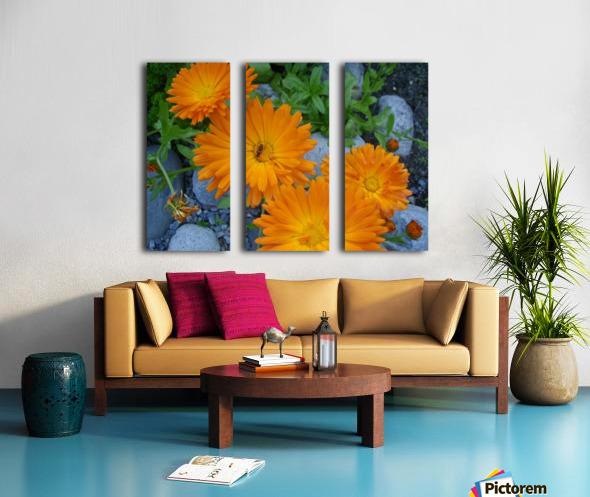 Orange Daisies & Bee Split Canvas print