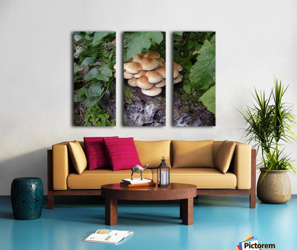 Bun Mushrooms Split Canvas print