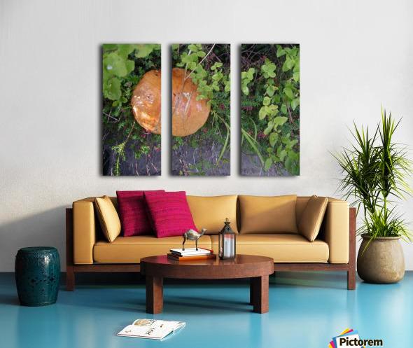Bisquit Mushroom Split Canvas print