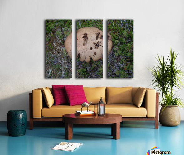Cookie Mushroom Split Canvas print