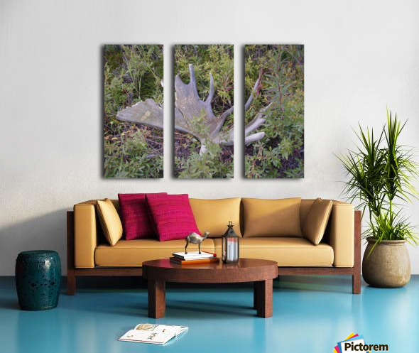 Moose antler Split Canvas print