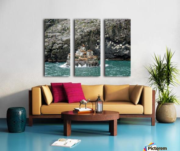 Seals Split Canvas print