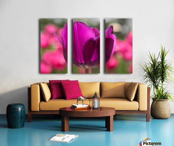 Violet - Violette Split Canvas print