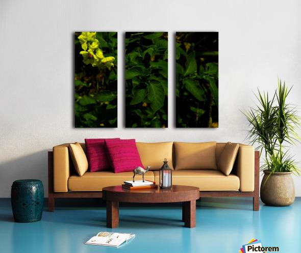 F (10) Split Canvas print