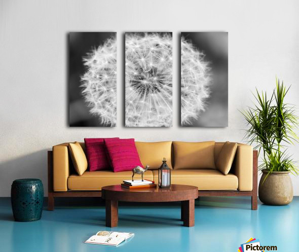 Dandylion black and White Split Canvas print