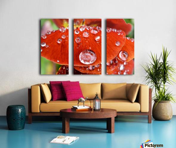 Raindrops On Orange Pansy Petal Photograph Split Canvas print
