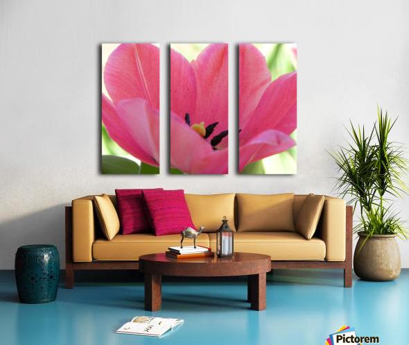 Beautiful Pink Tulip Photograph Split Canvas print