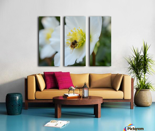 Bee On White Flower Photograph Split Canvas print