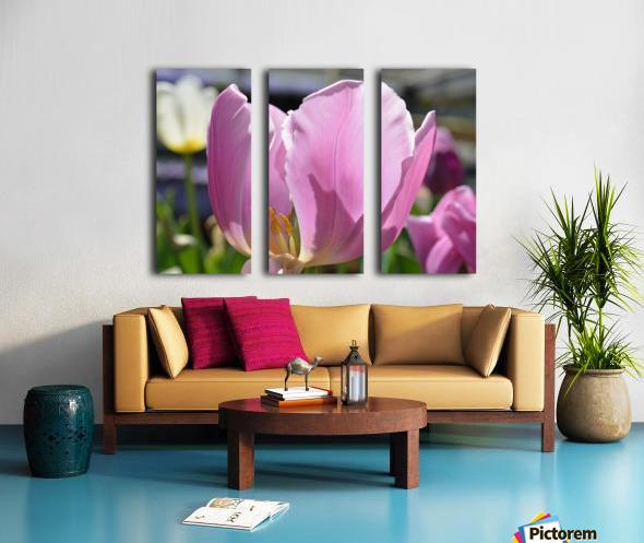 Purple Tulip Photograph Split Canvas print