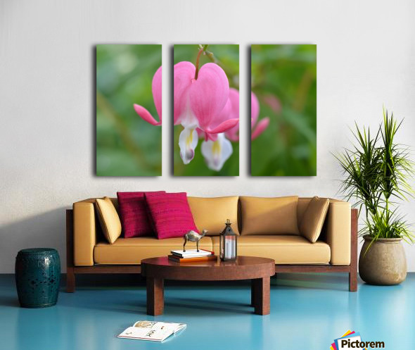 Bleeding Heart Flower Photograph Split Canvas print