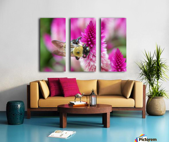 Bee On Pink Flower Photograph Split Canvas print